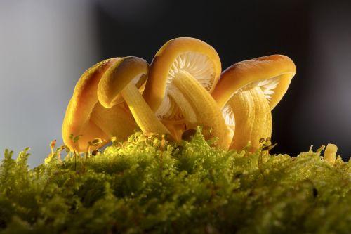 mushroom mushroom group nature