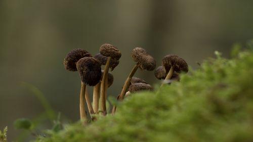 mushroom mushroom group moss