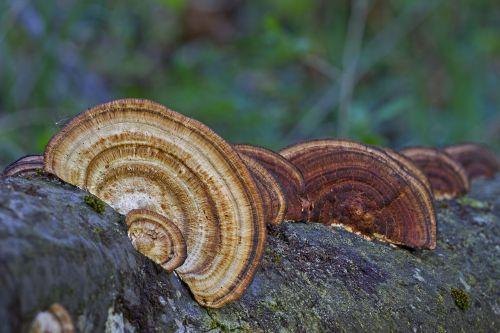mushroom wood fungus tree fungi