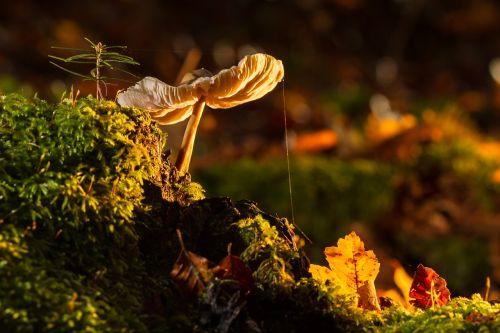 mushroom moss tree fungus