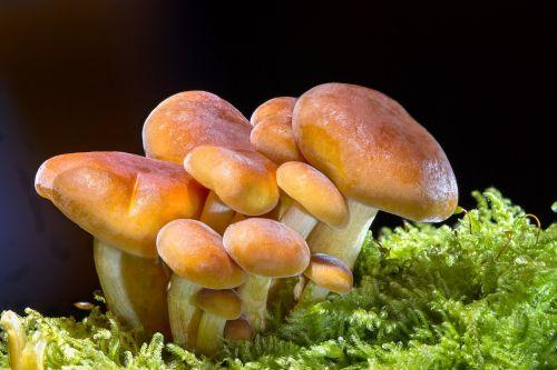 mushroom wood fungus sponge