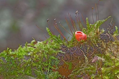 mushroom happiness mug moss