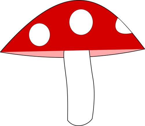 mushroom agaric forest