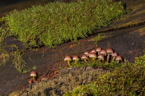 mushroom mushroom group sponge