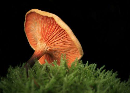 mushroom mushrooms nature