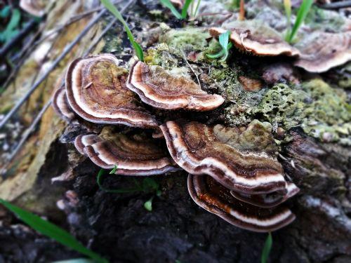 mushroom hub the parasite