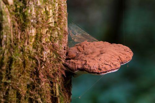 mushroom wood fungus tree fungus