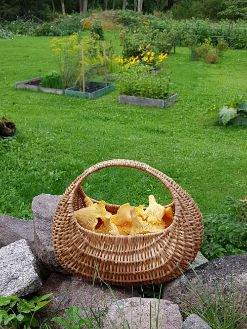 mushroom basket garden