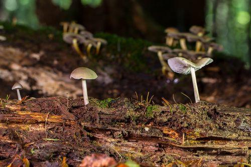 mushroom wood fungus small mushroom