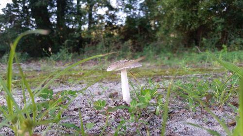 mushroom woods fungus