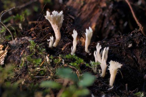 mushroom small mushroom sponge