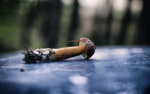 mushroom chestnut boletus forest litter