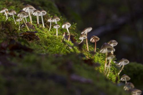 mushroom mini mushroom mushroom group