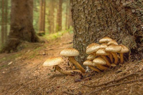 mushroom sparriger mushroom log