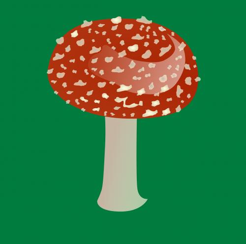 mushroom red plant