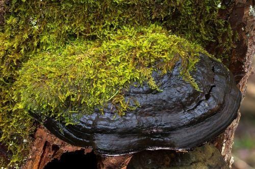 mushroom tree fungus bemoost