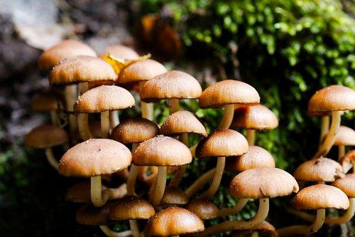 mushroom  rac  toadstool