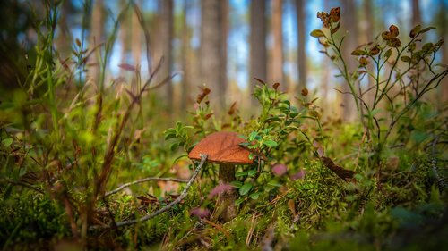 mushroom  forest  autumn