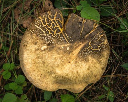 mushroom  nature  forest