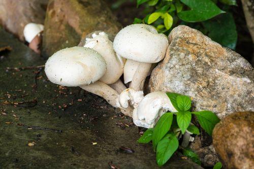 mushroom nature white