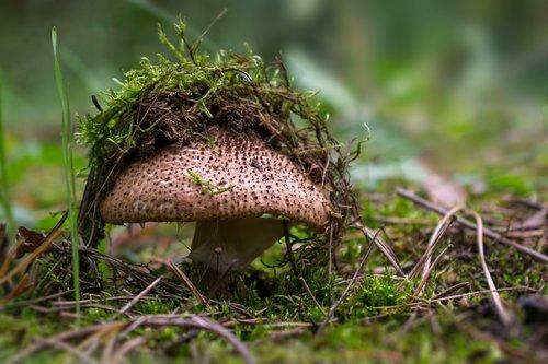 mushroom  forest  mushroom caps