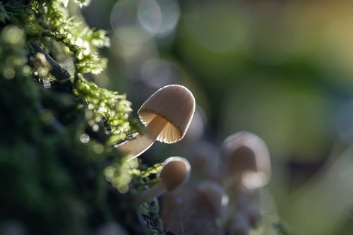mushroom  autumn  moss
