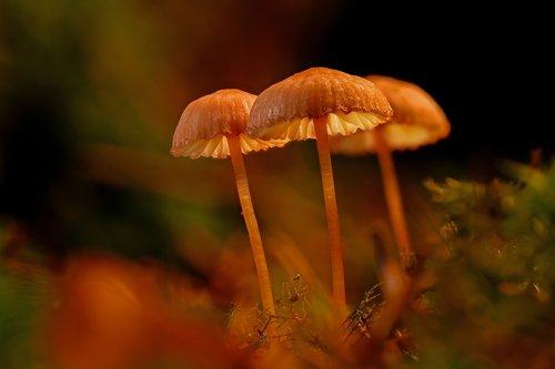 mushroom  mushrooms  sponge