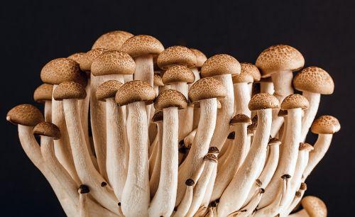 mushroom fungi fungus