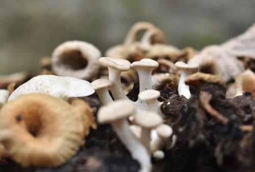 mushroom  moist  nature