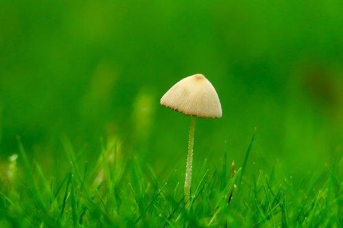 mushroom  fresh  natural