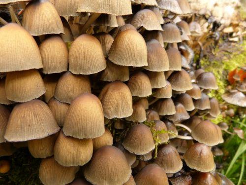 mushroom forest nature