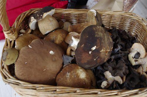 mushroom basket booty