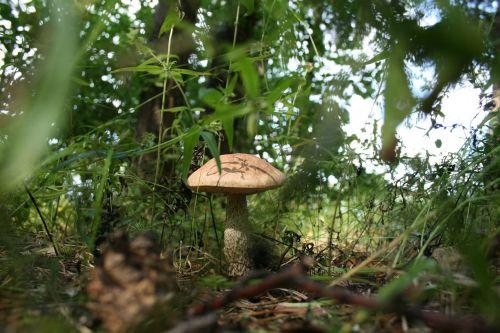 mushroom forest mycelium