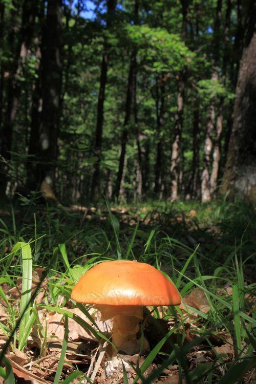 mushroom fungi floor