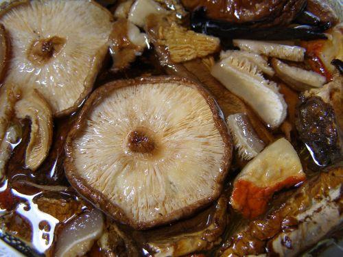 mushroom shiitake fungus