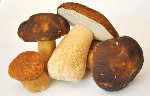 mushroom porcini mushrooms forest