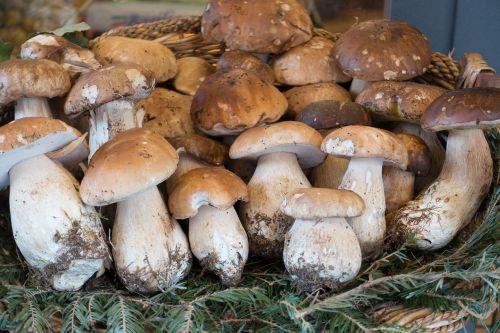 mushroom cep basket