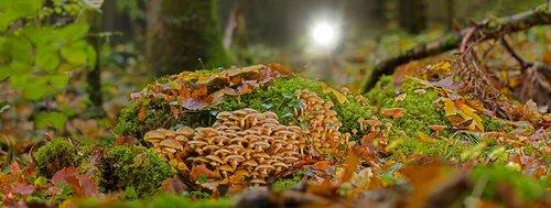 mushroom collection  mushrooms  forest mushrooms