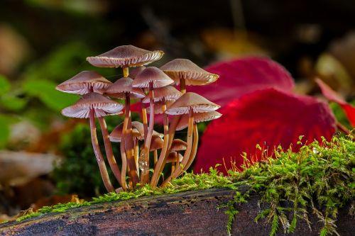 mushroom group mushrooms sponge