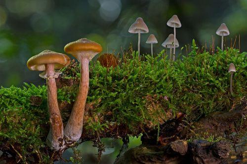 mushroom group small mushrooms sponge