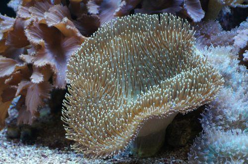mushroom leather coral coral underwater world