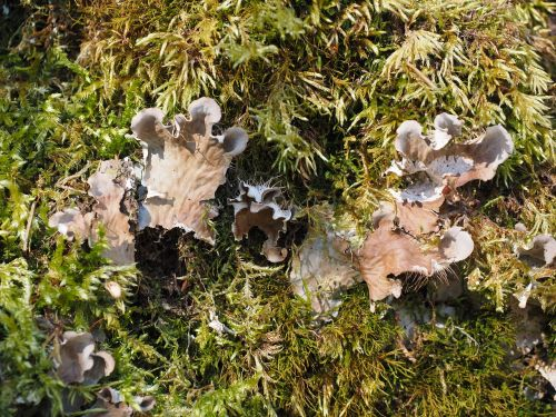 mushrooms moss curled crater elle