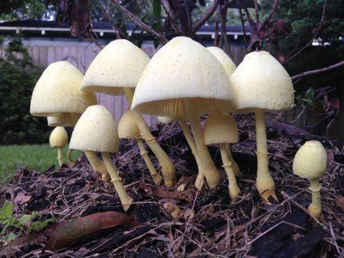 mushrooms toadstools fungi