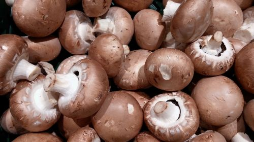 mushrooms mushroom root champignon