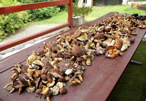 mushrooms mushroom picking cleaning sponges