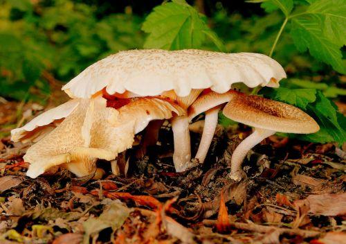 mushrooms mushroom picking forest mushroom