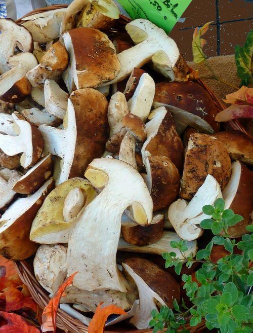 mushrooms autumn nature