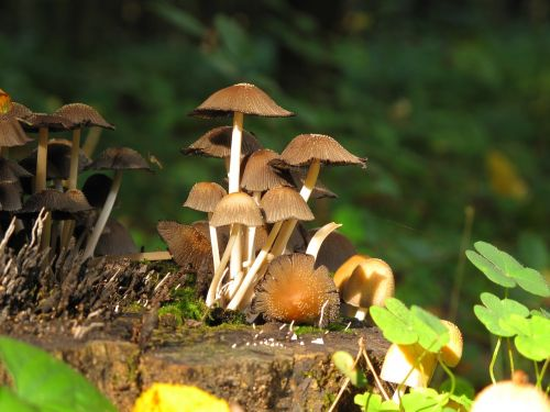 mushrooms forest konar