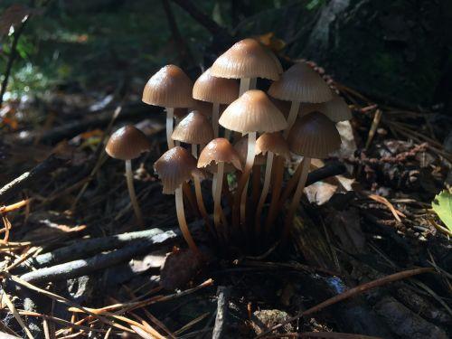 mushrooms underwood autumn