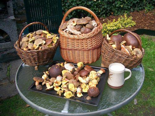 mushrooms basket with mushrooms forest